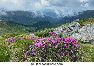 Flor de arbusto rododendro en las montañas