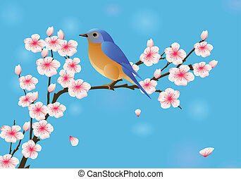 Flor de cerezo con petirrojo