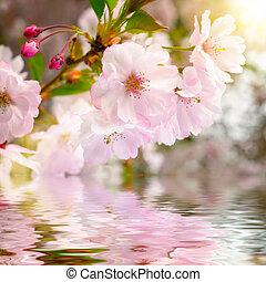 Flor de cerezo con reflejo en el agua