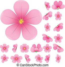 Flor de cerezo, flores de sakura, set, rosa, colección de flores, ilustración del vector