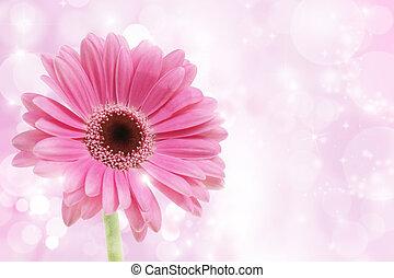 Flor de gerbera rosada