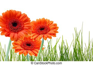 Flor de hierba y espacio de copia