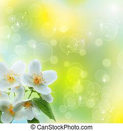 Flor de Jasmin como fondo natural abstracto