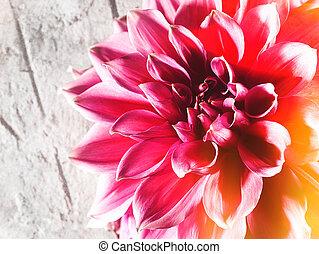 Flor de loto de belleza sobre backgroungs naturales abstractos