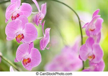 Flor de orquídea rosa