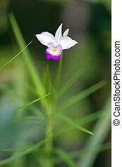 Flor de orquídea salvaje