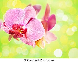Flor de orquídea sobre fondo verde abstracto