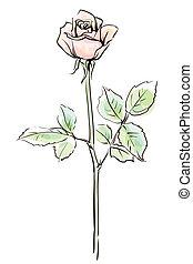 Flor de rosa única aislada en el fondo blanco, ilustración vectorial