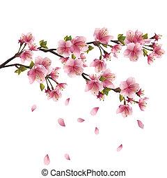 Flor de Sakura, cerezo japonés