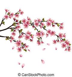 Flor de sakura realista, cerezo japonés con pétalos voladores aislados en el fondo blanco