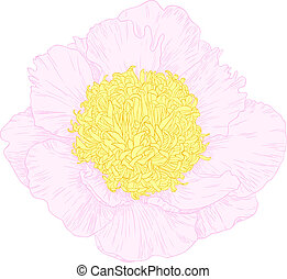 Flor de vector peonía.