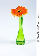 Flor decorativa aislada en blanco