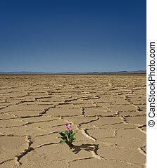 flor, desierto