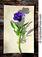 Flor en papel viejo