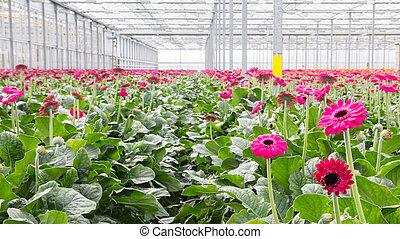 flor, guardería infantil, invernadero