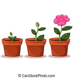 flor, ilustrador, crecimiento