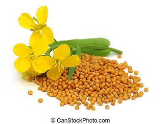 flor, mostaza, semillas