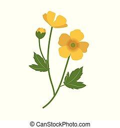 flor, naturaleza, ranúnculo