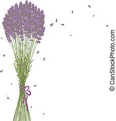 flor púrpura, lavanda, plano de fondo