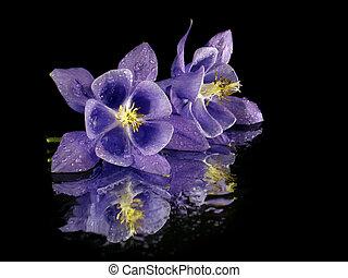 flor, púrpura