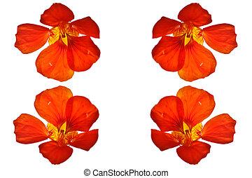 Flor roja cerca