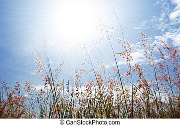 Flor silvestre, hierba y cielo