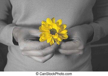 flor, tenencia, contra, mano, brillante, negro, fondo amarillo, blanco