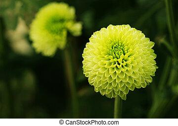 Flor verde en primer plano