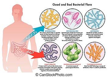 Flora bacterial intestinal