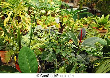 flora tropical