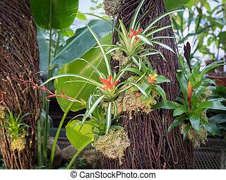 floral, flowers., bromelia, florecer, plano de fondo, colorido