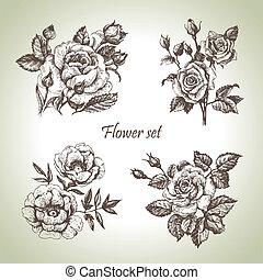 floral, set., mano, rosas, ilustraciones, dibujado