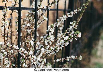 florecer, arbustos, jardín, fondo., ramas