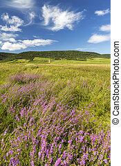 florecer, hungría, tokaj, pradera, norteño, región