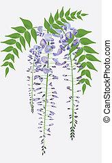 Floreciendo sucursal de Wisteria con hojas, ilustración vectora