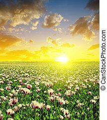 Floreciente campo de amapolas en el cielo del atardecer.