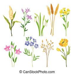 florecimiento, flores salvajes, plantas, herbáceo, vector, colección