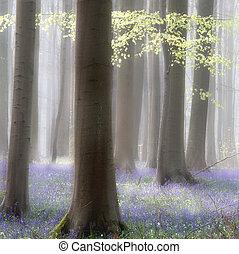 Flores abstractas del bosque de primavera y el primer verde