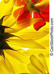 Flores amarillas y rojas de verano.