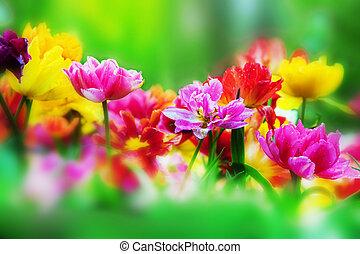 Flores coloridas en el jardín de primavera