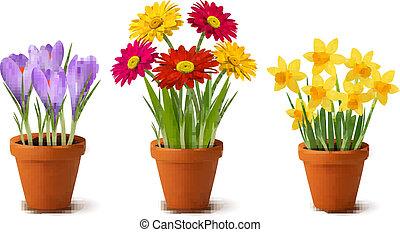 Flores coloridas en ollas