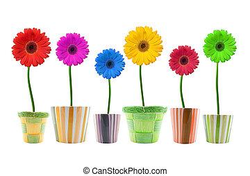 flores, colorido, gerbera