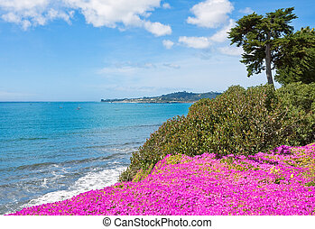 Flores costeras de California