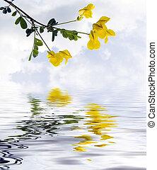 Flores de campo amarillo