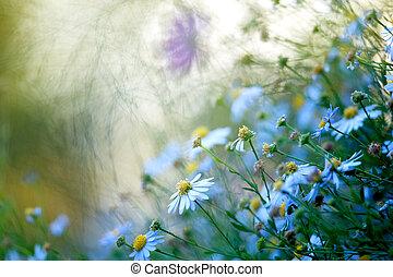 Flores de campo en el primer plano del atardecer