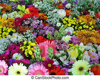 Flores de exposición