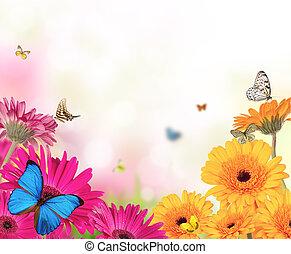 Flores de Gerber con mariposas