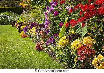 Flores de jardín coloridas