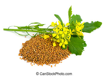 Flores de mostaza y semillas.