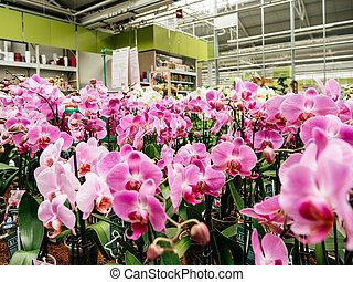 Flores de Orquídeas de Orquídea de Orquídea